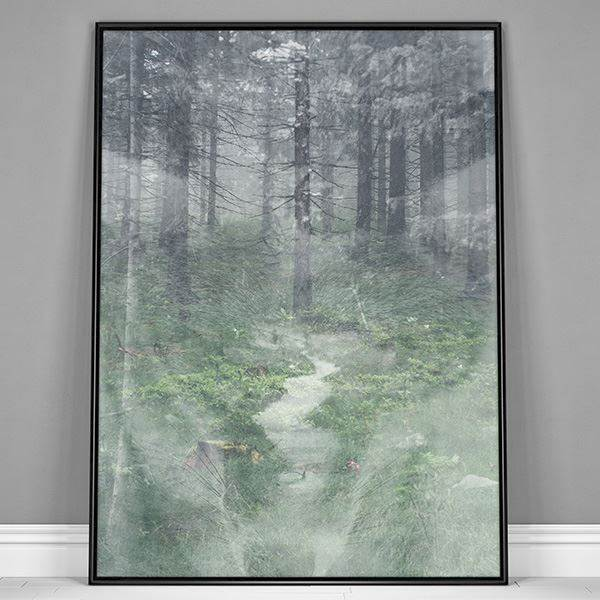 Plakat - Misty forest