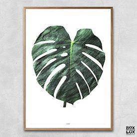 Plakat - Monstera, grøn